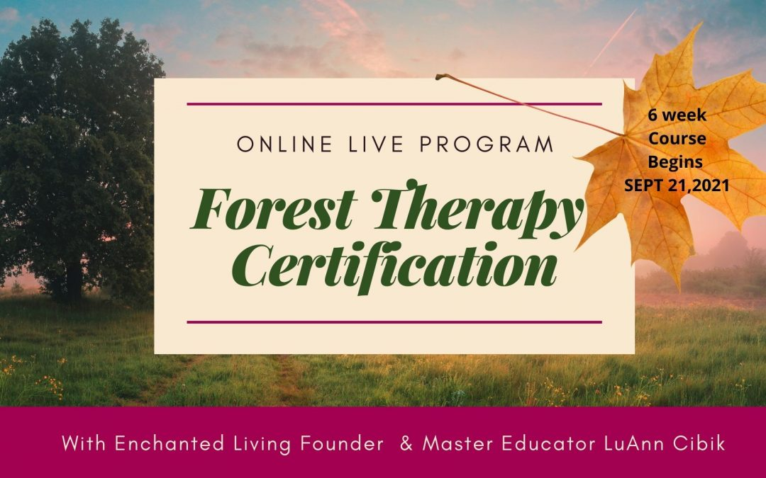 Inner Harmony Forest Therapy Certification